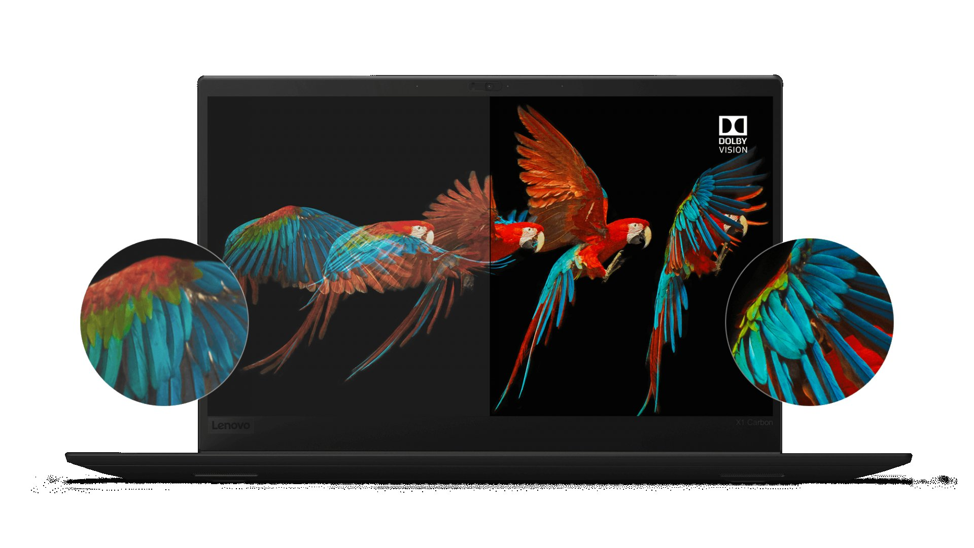 Lenovo ThinkPad X1 Carbon HDR display with Dolby Vision, showing amazing detail and color accuracy of a parrot's wings in flight.
